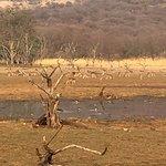 Photo de Ranthambore National Park