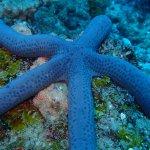 Foto de Odyssea Dive