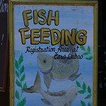 Fish Feeding Activity