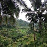 Tegalalang rice field (298601209)