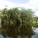 Foto di Pacaya Samiria National Reserve