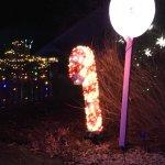 Winter Lights at Asheville Arboretum '17.
