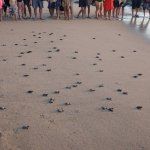 The turtles release