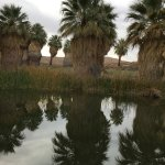 Photo of Coachella Valley Preserve