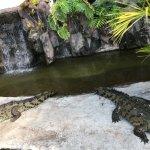 Foto de Croc's Resort & Casino
