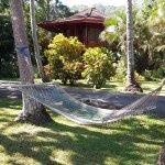 Several hammocks
