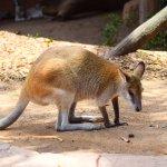 Foto de Wild Life Sydney Zoo