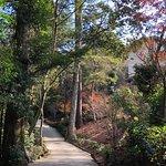 宮島 (厳島)の写真