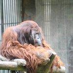 Photo of Bandung Zoo