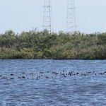 Photo de Canaveral National Seashore