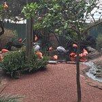 Photo of Busch Gardens Tampa