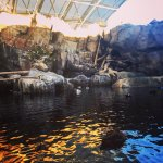 Photo de Alaska SeaLife Center