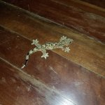 A gecko who plopped onto the dining room floor