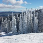 Snowy frosty trees at Morningside at Steamboat resort. View to the east.