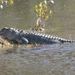 alligator sunning on a Sunday afternoon