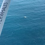 Photo of Wings Over Whales