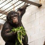 ภาพถ่ายของ Chelyabinsk Zoo