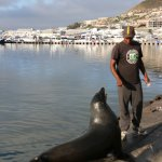 Hand fed Seal at Hout Bay