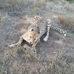 Photo of African Game Lodge