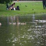 Vondel Park 2
