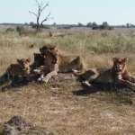 Foto de Savute Reserve