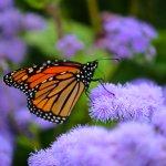 Butterflies everywhere!