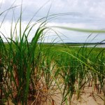 Foto de Cape Cod National Seashore