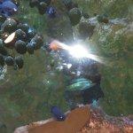 Sea Life Aquarium Jan 2018