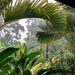 From the restaurant: Garden in the rain.