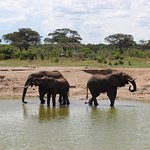 Elephant's Eye, Hwange Photo