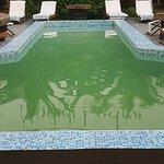 green swamp like pool