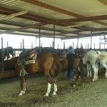 Foto de White Stallion Ranch
