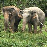 Twinpalms Phuket Foto