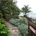 Foto de Las Rocas Resort & Dive Center