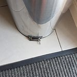 دانيمورا موتور إن صورة فوتوغرافية