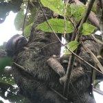 Sloths at Corcovado