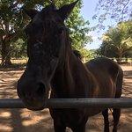 Beautiful horses!