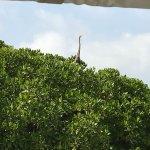 תמונה מFarasan Coral Resort