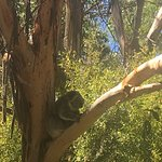 Close koalas