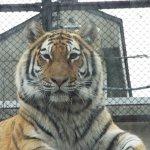 Omoriyama Zoo รูปภาพ