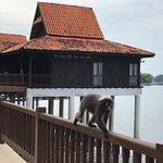 Billede af Berjaya Langkawi Resort - Malaysia