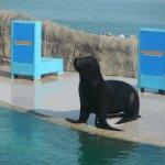 Photo de Cofresi Palm Beach & Spa Resort