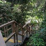 Photo of MacRitchie Nature Trail
