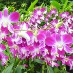 Foto de National Orchid Garden
