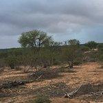 Photo de Naledi Game Lodges