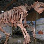Uno de los fósiles expuestos