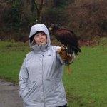 Don't miss the hawk walk.