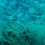 Fish & sea urchins
