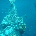 Foto Aruba Watersports Center