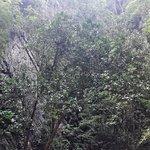 Photo of Morakot Cave (Emerald Cave)